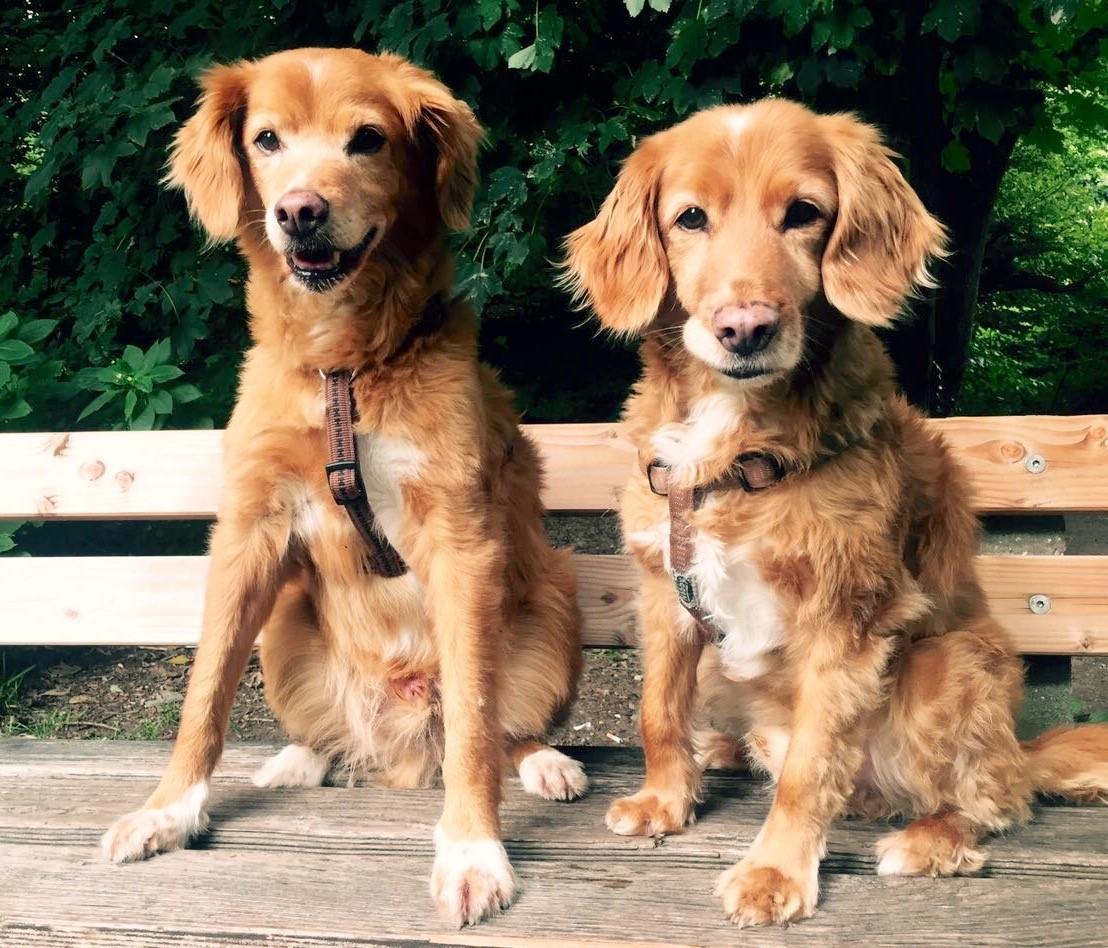 Hundeerfahrene Pflegestellen gesucht