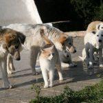 Die Hunde von Cabu Abbas