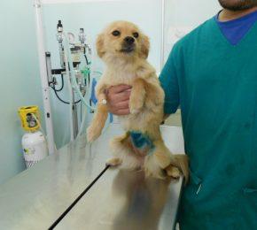 1200 Hunde kastriert