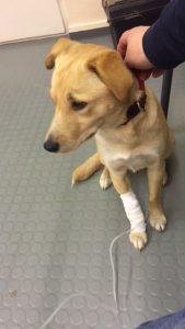 Beim Tierarzt mit einer seiner drei Infusionen. Er war unheimlich tapfer und kooperativ.