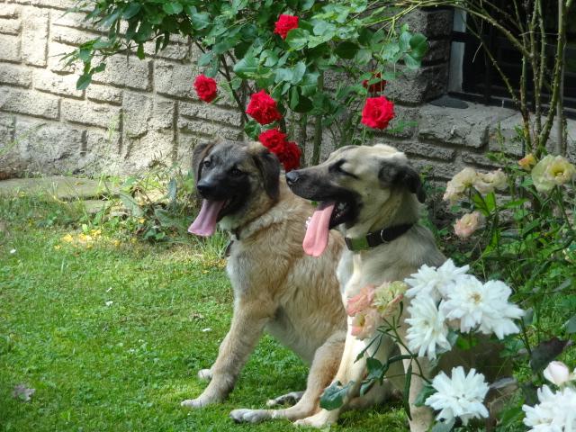 Lucky und Miro