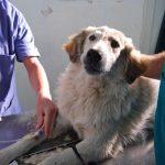 Hunde Cabu Abbas 2012