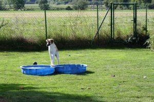 Pflegestelle-Stasiack (13)