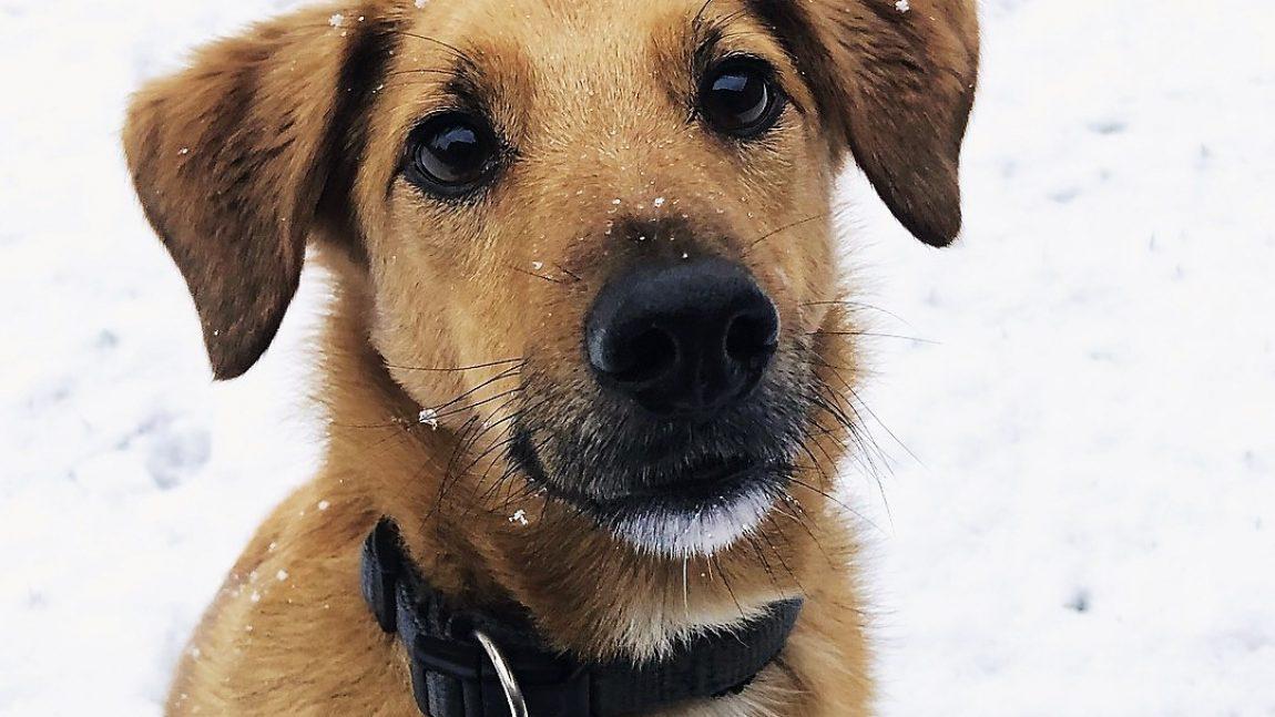 Winterhundefotos