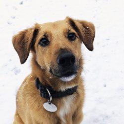 Winterhundefotos 2017
