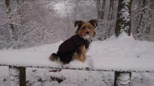 Wilma im Winterurlaub