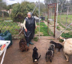 Teresas Hunde benötigen unsere Hilfe