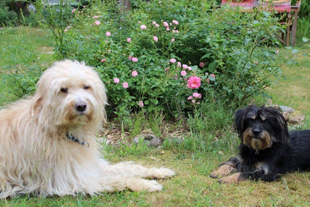 Odin und Boris