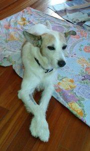 Snoopy (3)