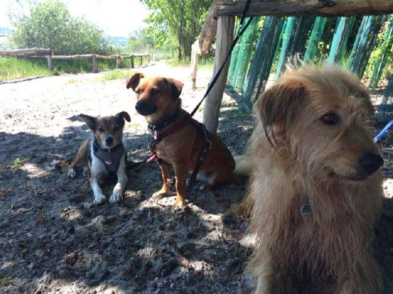 Lupino, Lou und Beppe