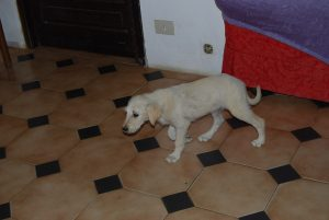 Brigette (4)