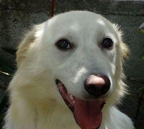 Hermosa -Notfallhund-