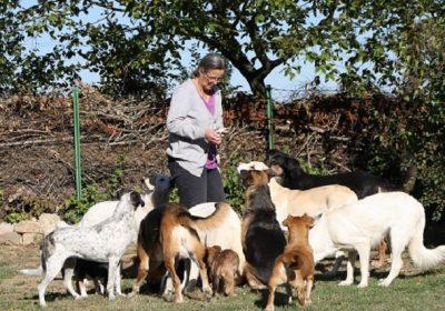 Der 10. Oktober ist Welthundetag
