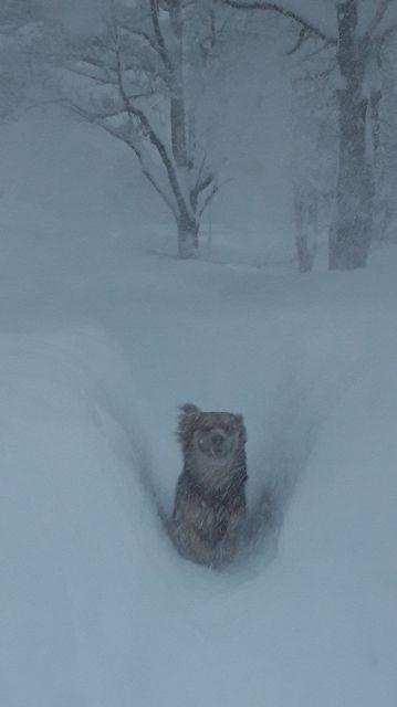 Beppo im Schnee