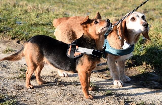 Minnie und Figo