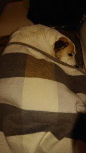 Snoopy (2)