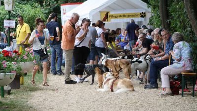 Save the Date – Sommerfest