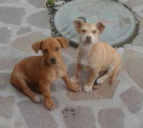 Tonino und Topolino