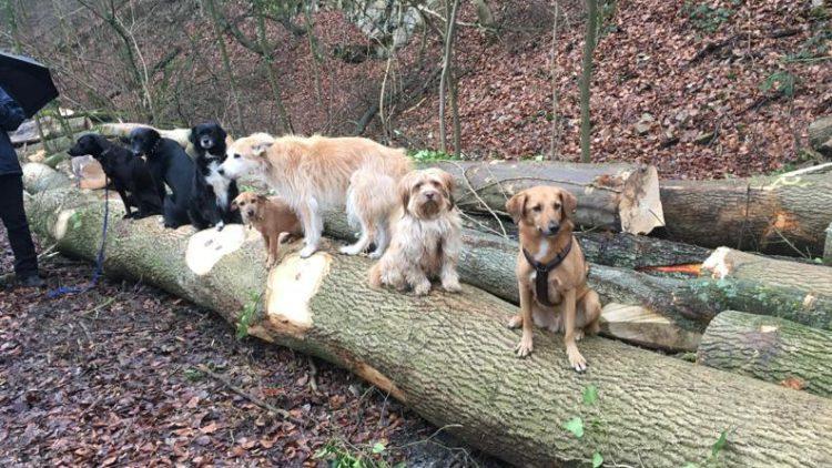 HundeRunde Düsseldorf