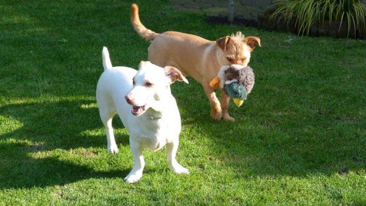 Tino und Leo