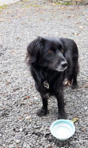 HundeRundeLinz18102020 (10)