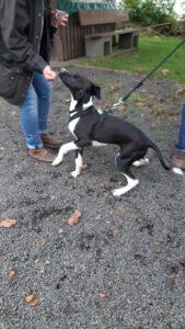 HundeRundeLinz18102020 (11)
