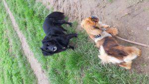 HundeRundeLinz18102020 (3)