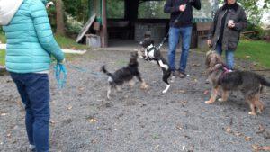 HundeRundeLinz18102020 (6)