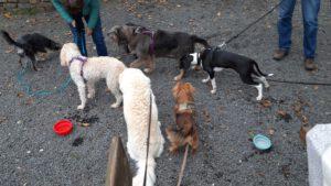 HundeRundeLinz18102020 (7)