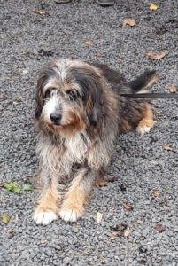 HundeRundeLinz18102020 (9)