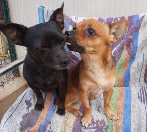 Minnie und Topolino