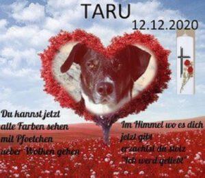 k-Taru