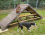 HundeRunde Linz a.Rh.